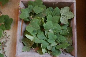Abgeschnittene Blätter für den Kompost