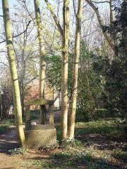 Leise Park 02